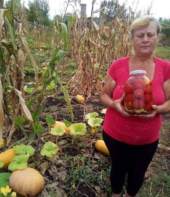 В Зайцево собрали урожай Папы Римского
