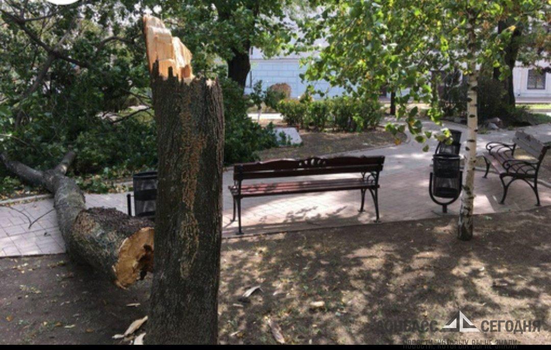 В Донецке ветер валит деревья