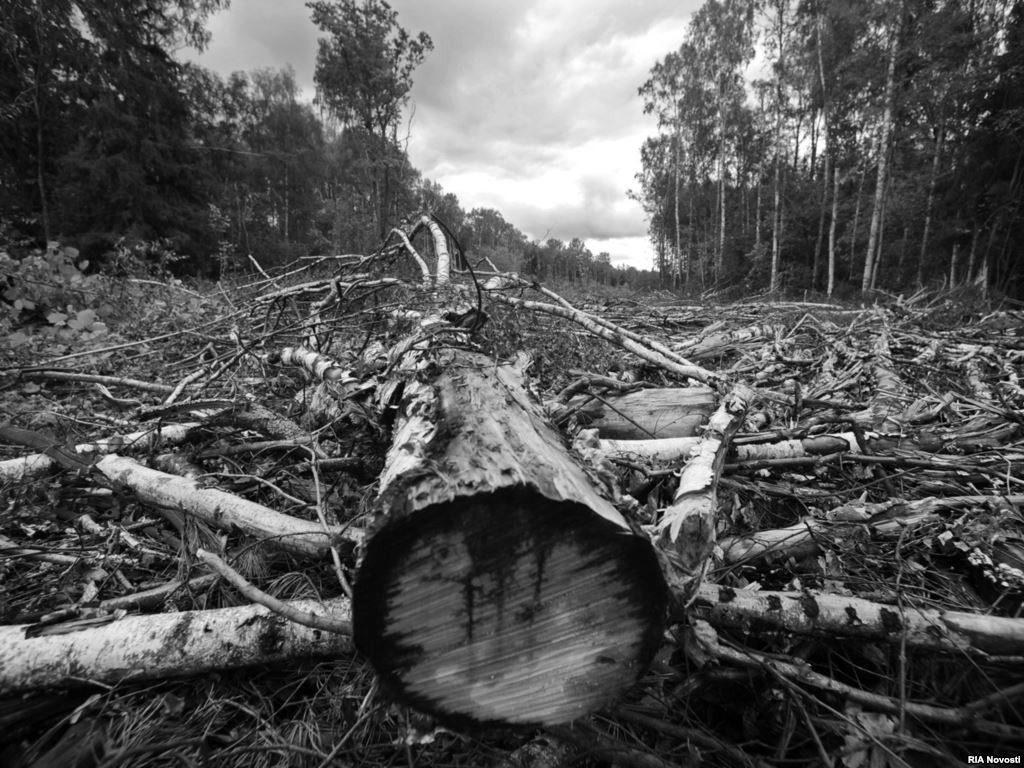ГС по ЧС Украины вырубила луганский лес на миллион грн