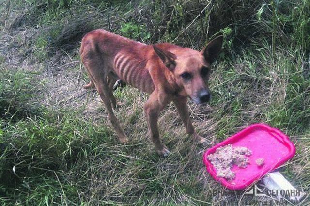 Брошенные во время войны в Донецке элитные кошки и собаки весили по 300 грамм и выглядели, словно скелетики