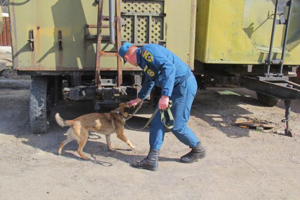 Бомбы в ДНР будут помогать искать бельгийцы Малинуа