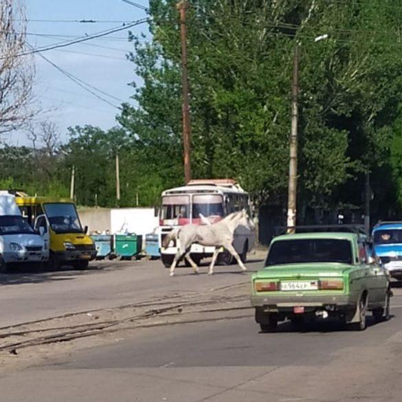 Сбежавший с Чулковки конь Рикошет скачет по районам Донецка