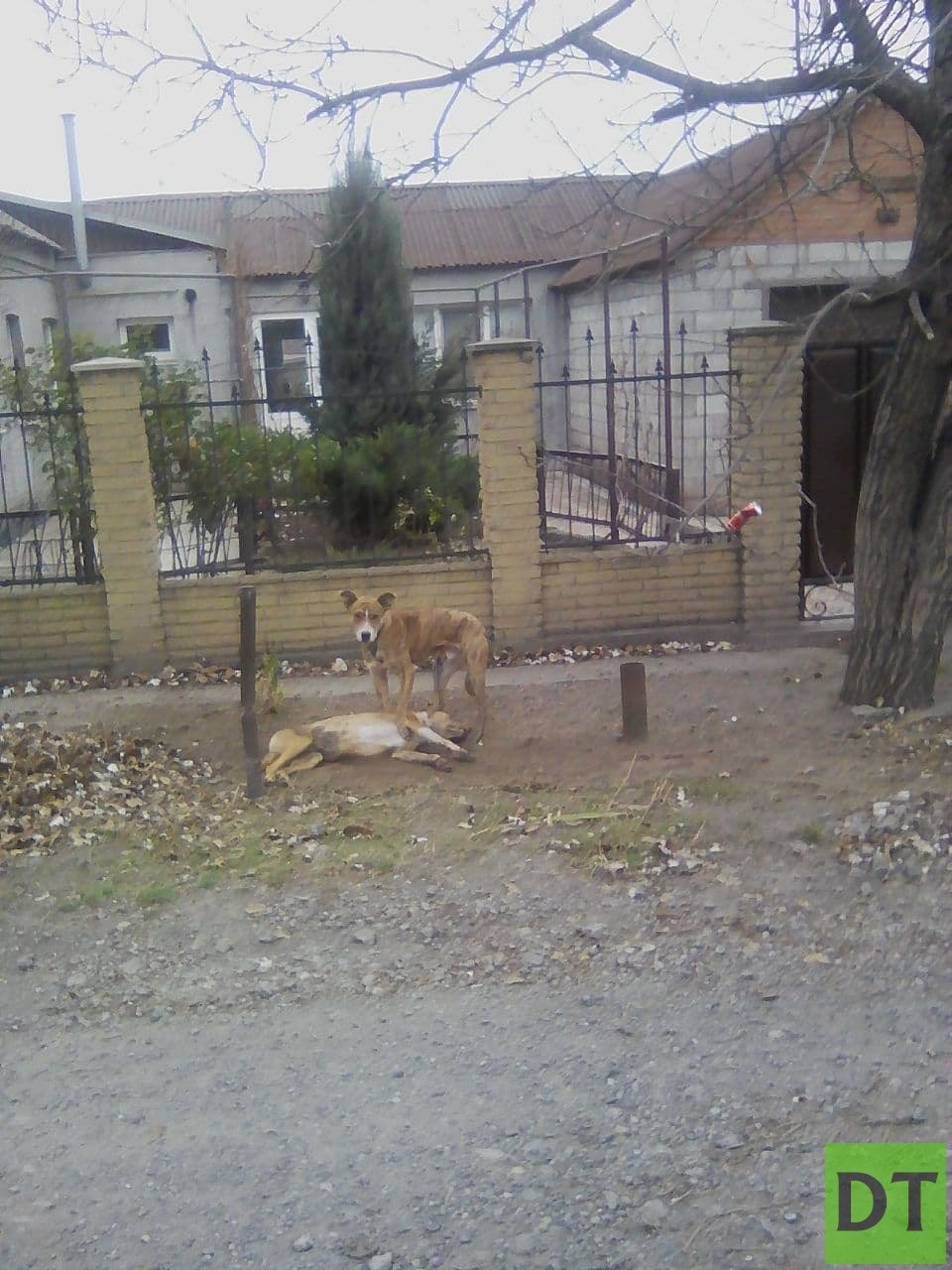 В Мариуполе собака не хочет оставлять своего мёртвого друга и может замёрзнуть
